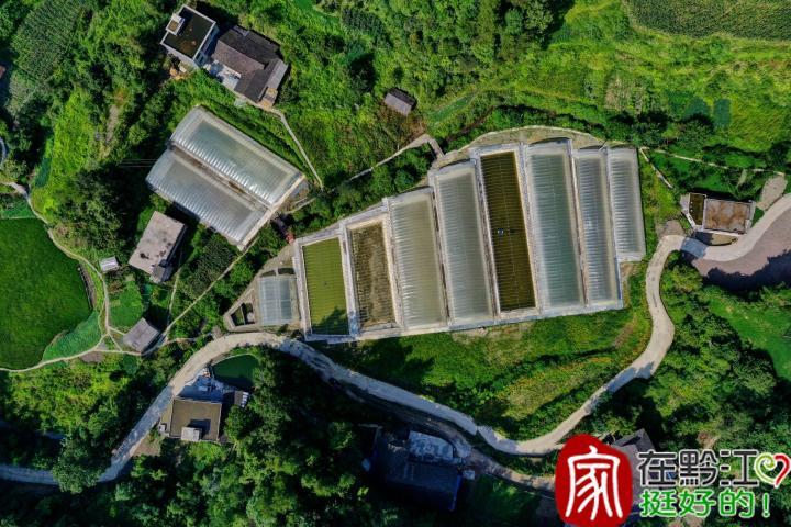 黔江聚焦聚力发展实体经济 现代